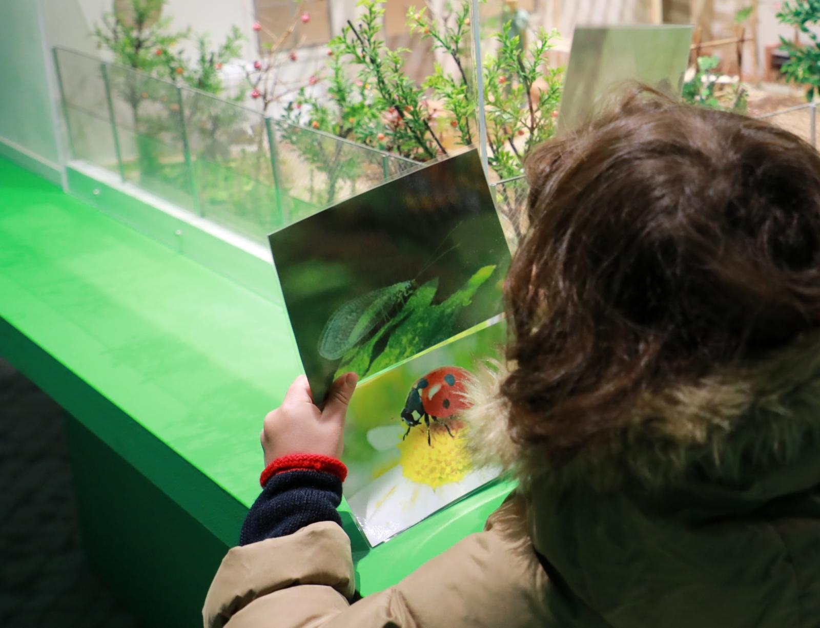 Criança a procurar o inseto que vê na imagem que segura com as mãos